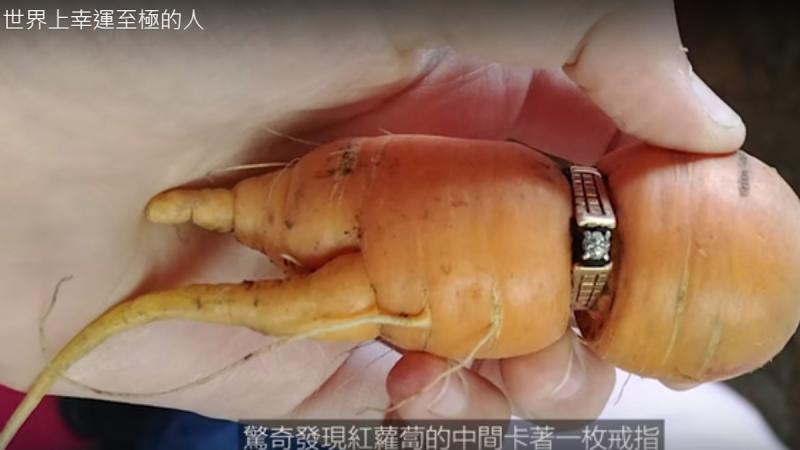 世界上幸运至极的人 丢失13年的结婚戒子长在萝卜上(视频)