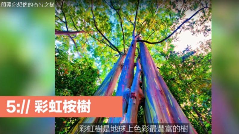 颠覆你想像的奇特之树 极为稀有(视频)