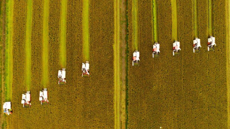 歷來首次 美國向中國出口稻米