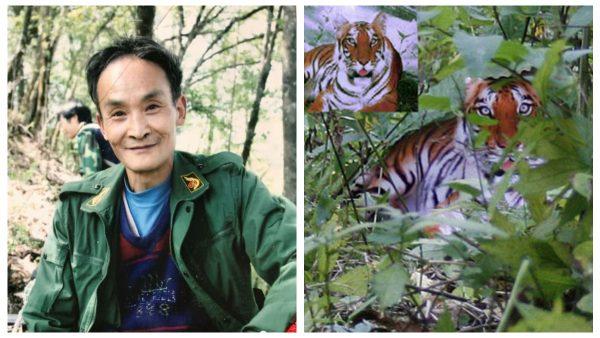 「華南虎事件」12年 周老虎出獄變身養蜂人