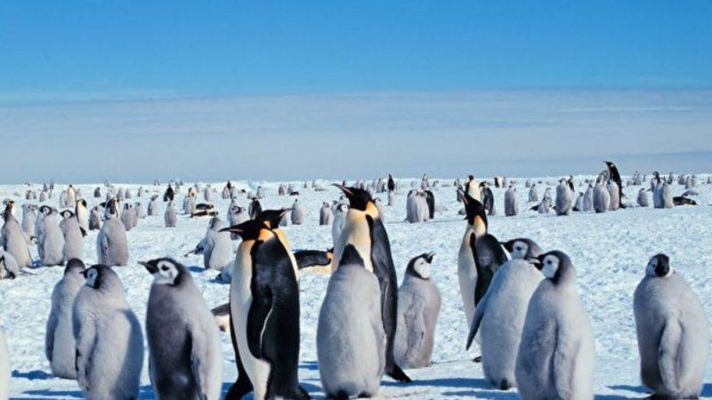 新西兰发现史前巨型企鹅