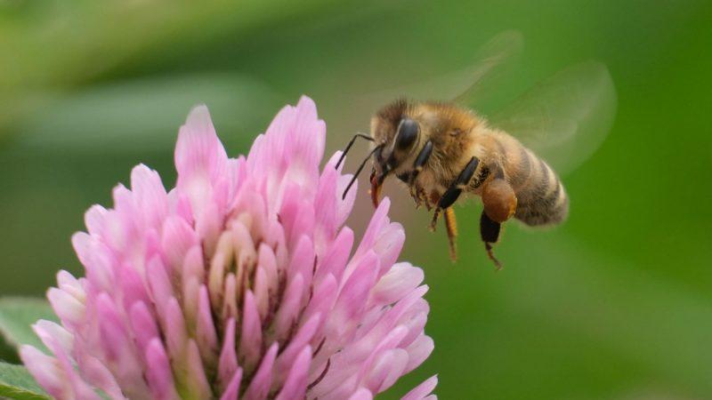 偷渡到英國的土耳其蜜蜂被判死刑 但逃走了