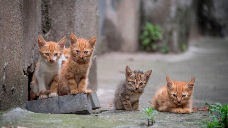 為什麼小貓會吃草?