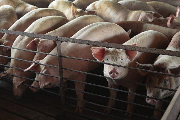 中國豬肉價創6年新高 漲幅或超70%