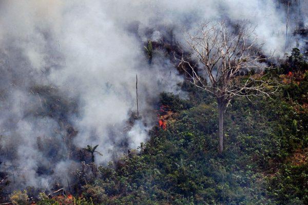 亞馬遜雨林遭火吞噬 每分鐘逾1.5個足球場被焚毀