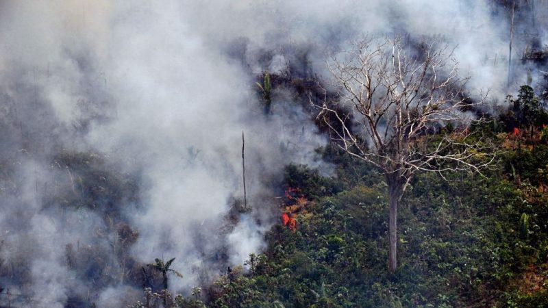 亚马逊雨林遭火吞噬 每分钟逾1.5个足球场被焚毁