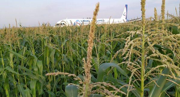 航空奇迹!俄客机遭鸟击迫降玉米田全部生还
