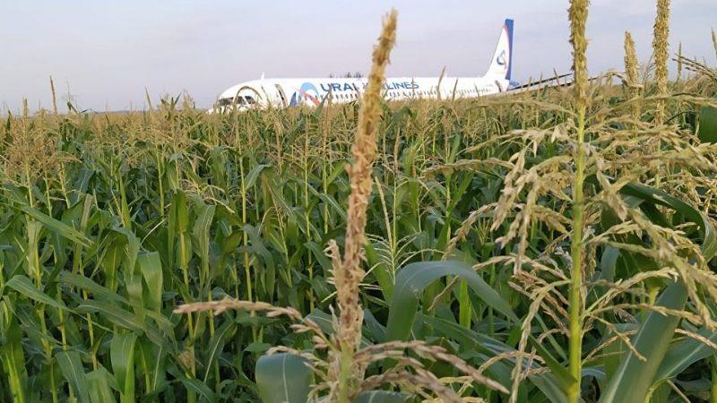 航空奇蹟!俄客機遭鳥擊迫降玉米田全部生還