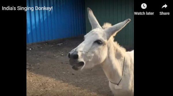 另類網紅!印度母驢愛唱家鄉調視頻瘋傳(視頻)