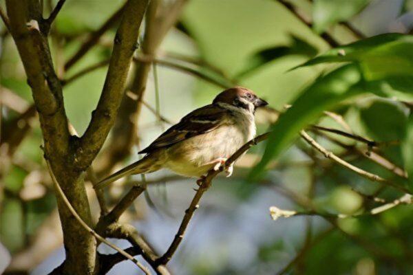 北美洲鳥類數量驟降 50年減少近30億隻