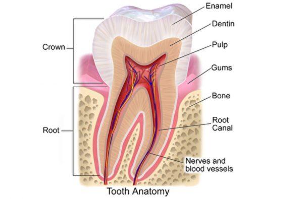 研究者發明神奇凝膠 可修復牙釉質