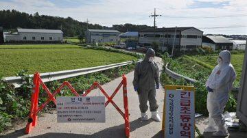 爆发非洲猪瘟 韩国1天内扑杀近4千头猪