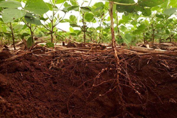 土壤微菌對植物抗病能力起關鍵作用