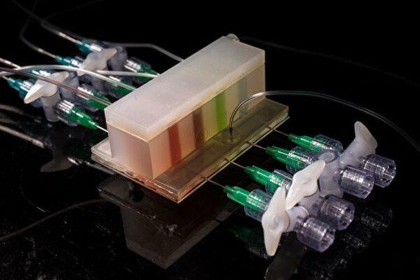 MIT造出人工肠道研究体内微菌