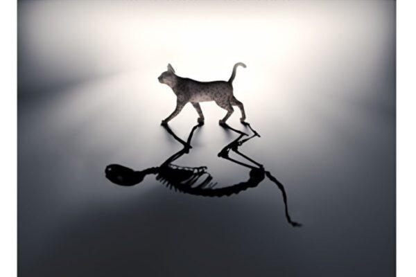 新研究窺探薛定諤貓生死叠加的量子態
