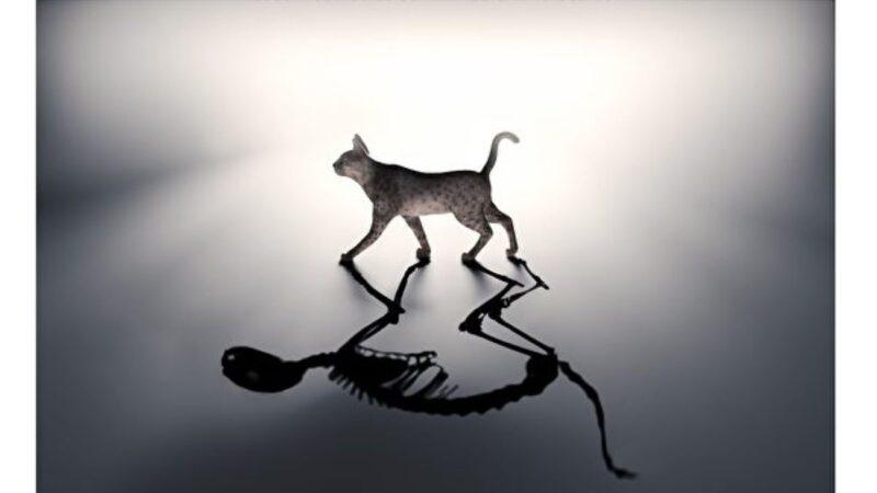新研究窥探薛定谔猫生死叠加的量子态