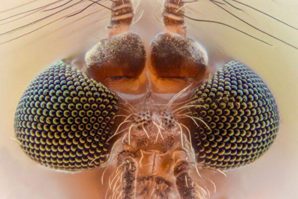 模仿蚊子复眼 新型油滴多镜头问世