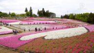 【你好日本】日本觀光名所秩父遊記(一):秩父之春