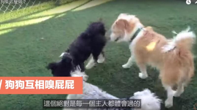 为什么狗狗要这么做?(视频)
