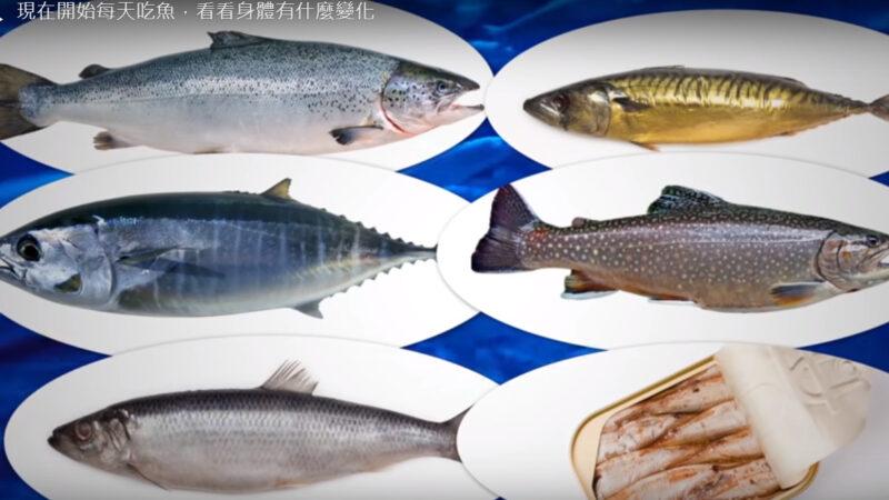 哪种鱼最健康 如果每天吃鱼 身体会有什么变化(视频)