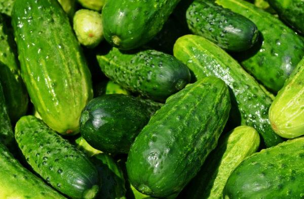 每天吃一根小黄瓜 竟然有数不尽的好处(视频)