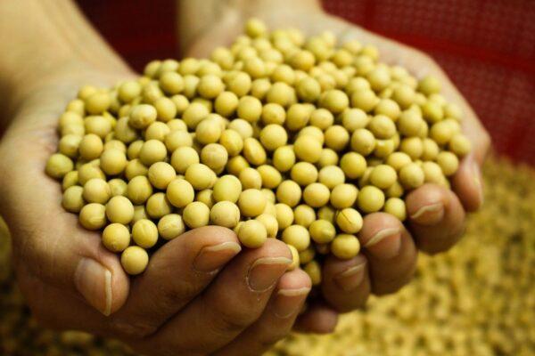 中共另有打算?美媒:北京頻購美大豆未必是好消息