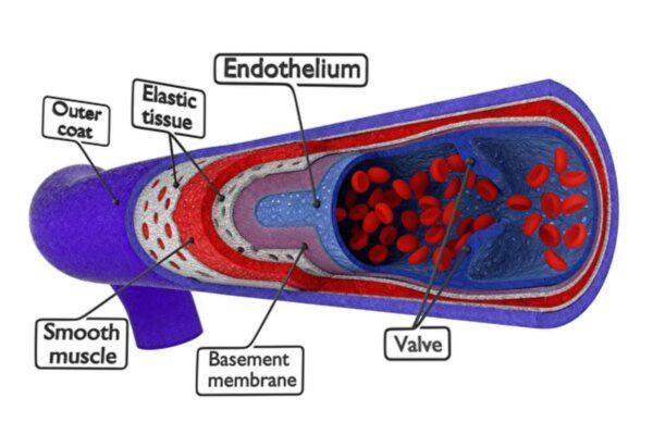 模擬人類微血管 新技術三維打印高效散熱器