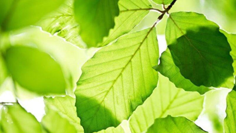 人造綠葉吸收CO2 生成燃氣