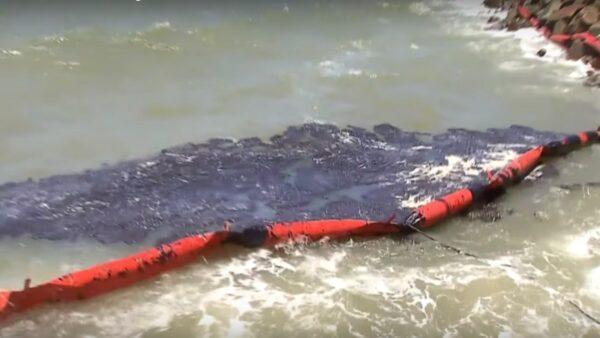 巴西浮油汙染困擾3個月 擴及座頭鯨保育區