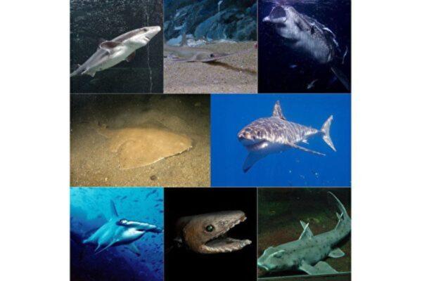 北美发现9100万年鲨鱼化石