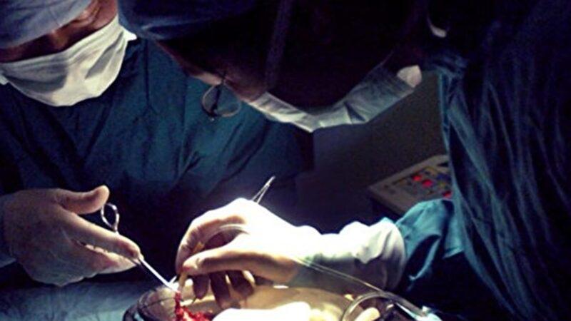 陳思敏:澳洲最新報告揭穿中共器官分配謊言