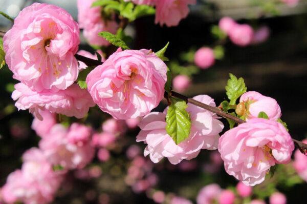【命理篇】女命帶桃花紅豔煞 被誤解上千年