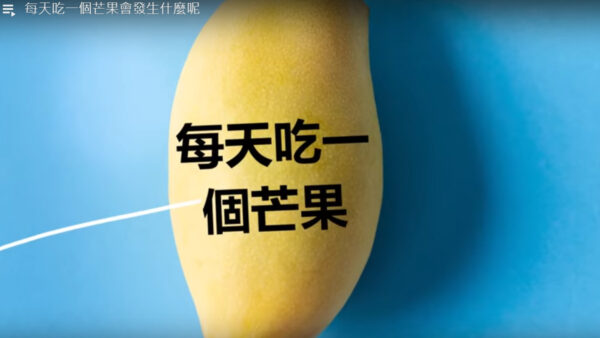 每天吃一个芒果 你会更健康、更年轻(视频)