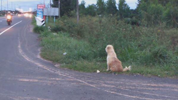 走失忠犬原地苦等4年 见到主人却转身离去
