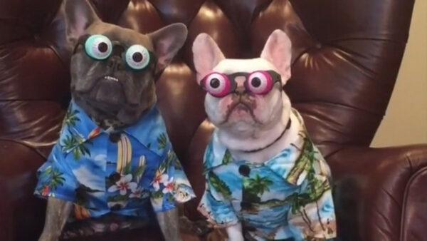 这些狗狗 个个都是超人啊!
