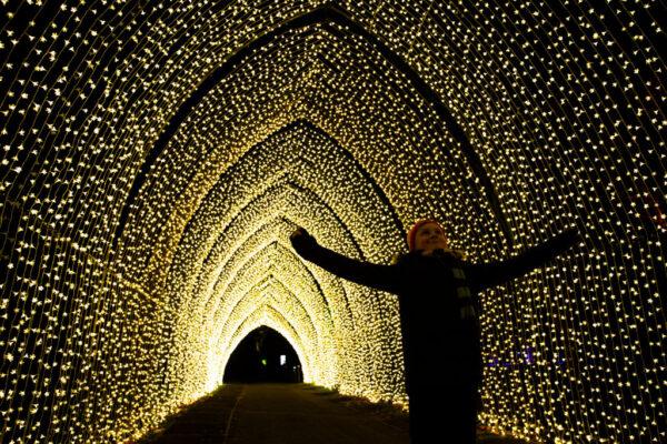 英王家植物园 耶诞浪漫灯光秀美不胜收(视频)