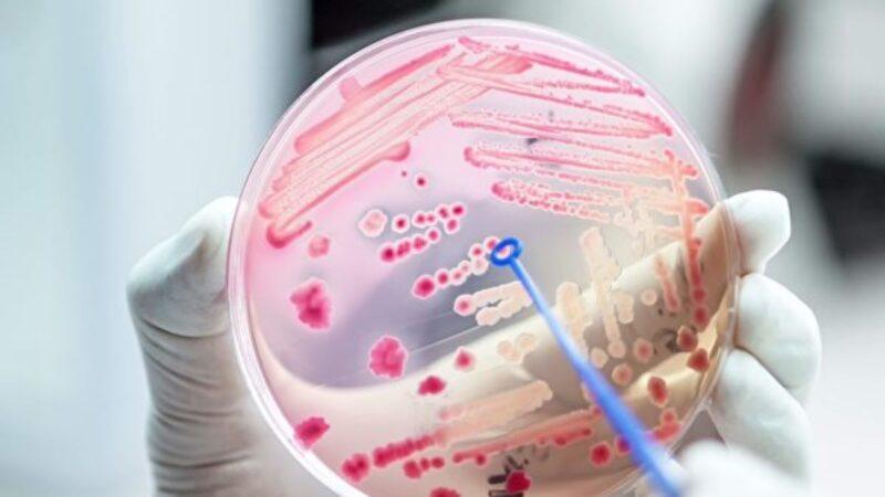 研究:细菌通过彼此联系躲避抗生素