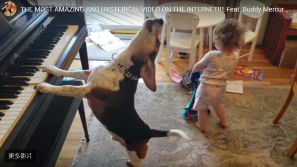 天才狗自弹自唱 2岁小主人伴舞逗乐500万人(视频)