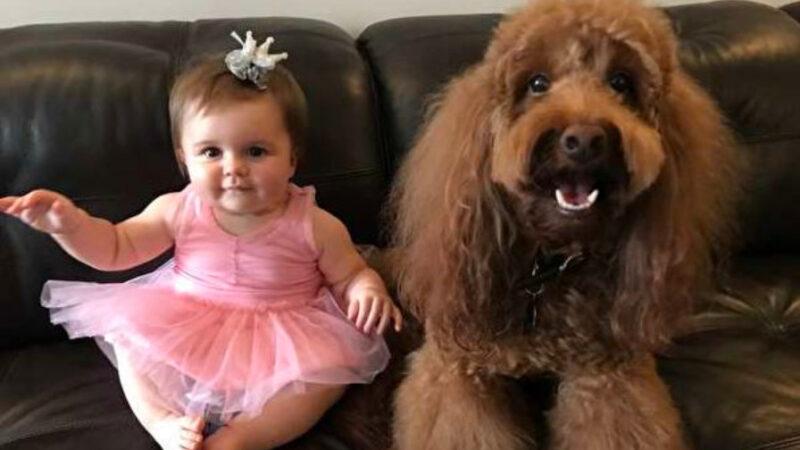 寶寶半夜哭鬧,看看狗狗進她房間做了什麼!(視頻)