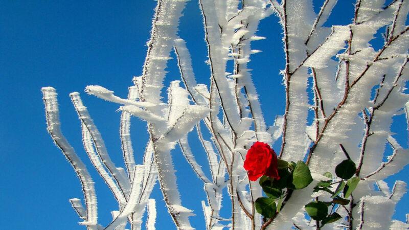 冬至「開運」民俗有哪些?