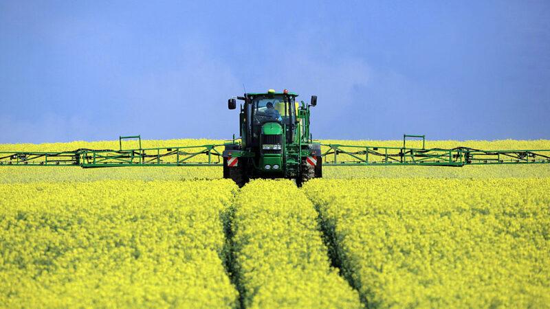 食用油需求上漲 加國油菜籽市場復甦