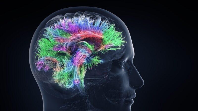 難得的人腦實驗發現其獨有特性