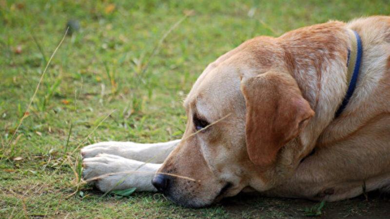 主人被逮捕 阿根廷忠狗在警察局外苦等一年(视频)