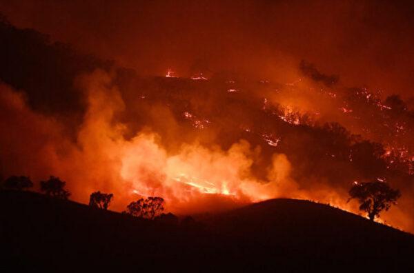 澳洲野火烧不尽 动物园园长把动物带回家养(视频)