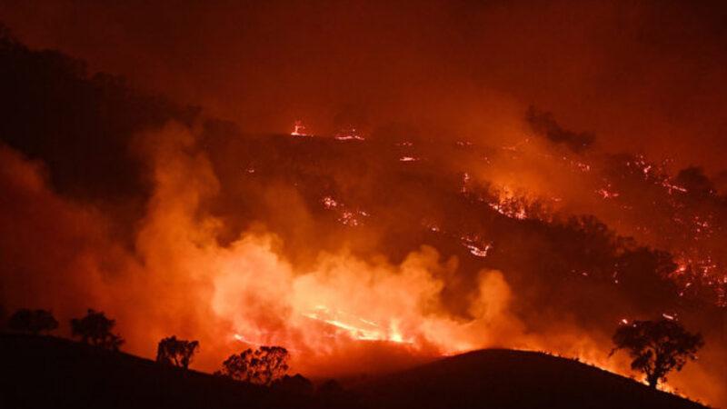 澳洲野火燒不盡 動物園園長把動物帶回家養(視頻)