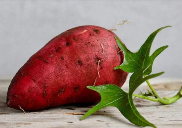 冬天到了吃紅薯,看後震驚了……一定要告訴家人!(組圖)