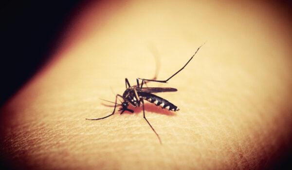 為何蚊子總是只咬我?其實是因為這些原因(組圖)