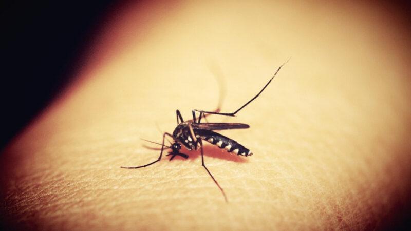 为何蚊子总是只咬我?其实是因为这些原因(组图)