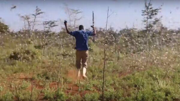 东非陷入虫虫危机 再不出招恐暴增500倍
