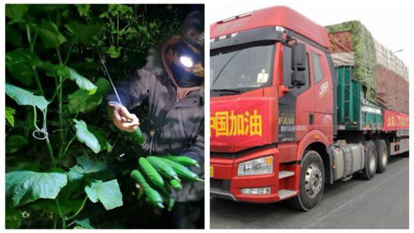 山东捐350吨蔬菜被抢 官媒与红会打起来了